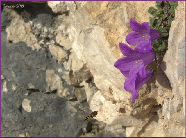 salita al Monte Pelmo 3168 m. s.l.m.