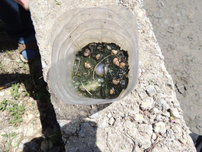 Bottled beetles
