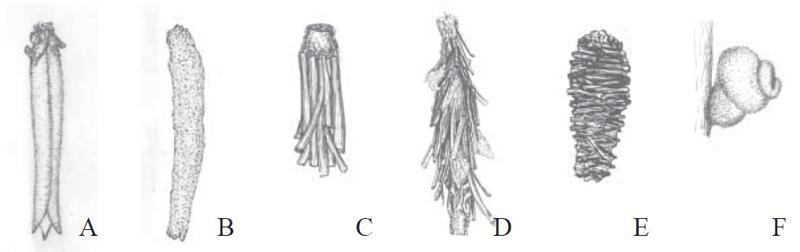 Chiavi di identificazione degli Psychidae dell''Italia