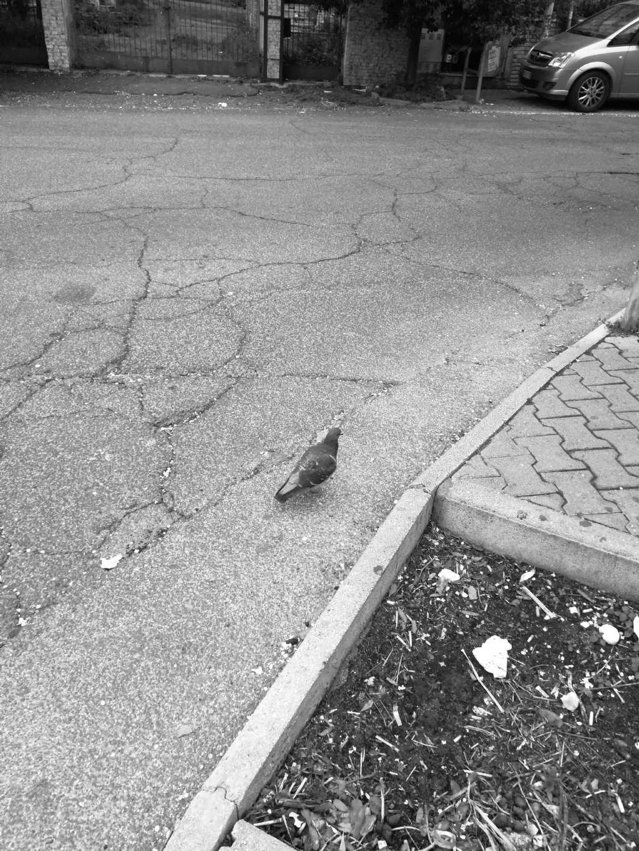 Aiuto per individuazione uccello