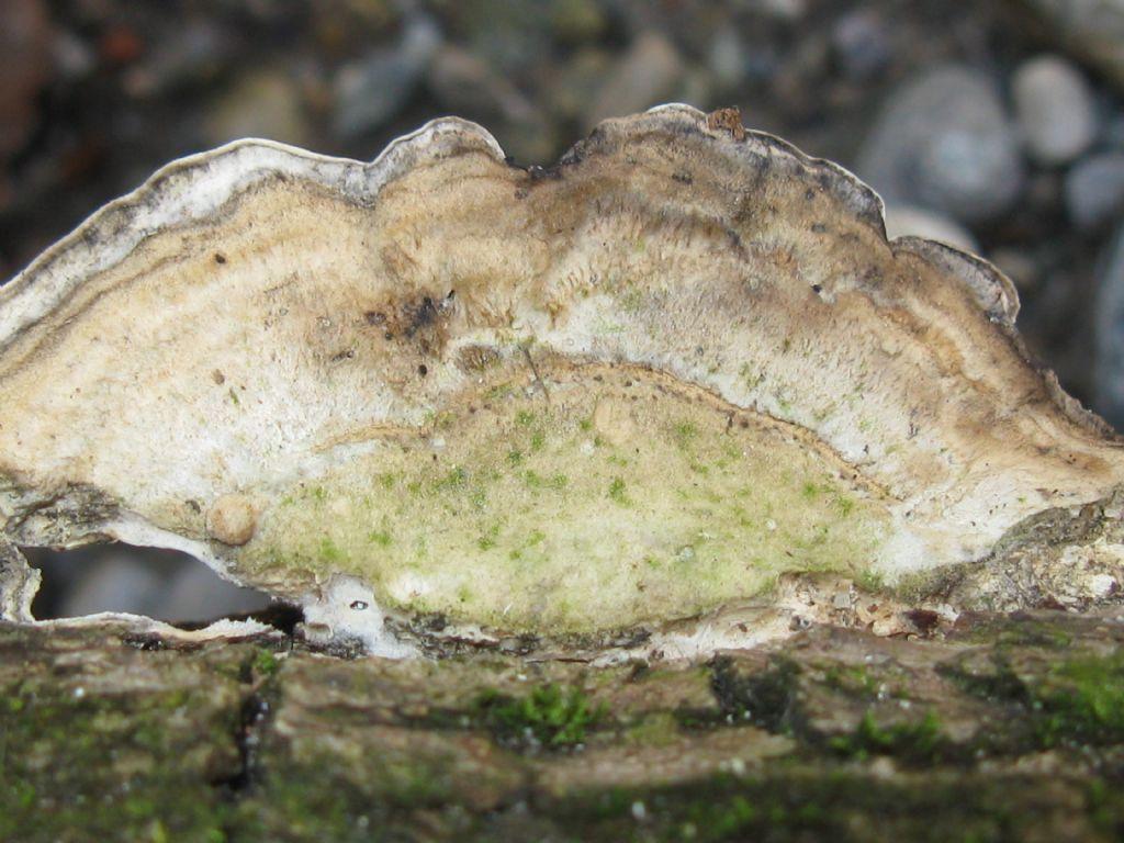 Funghi nel Parco di Monza 7