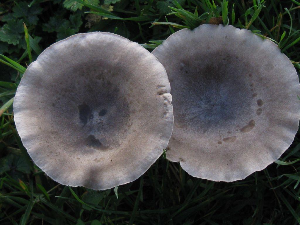 Funghi nel Parco di Monza 2