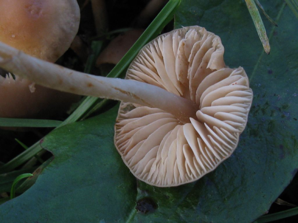 Funghi nel Parco di Monza 3