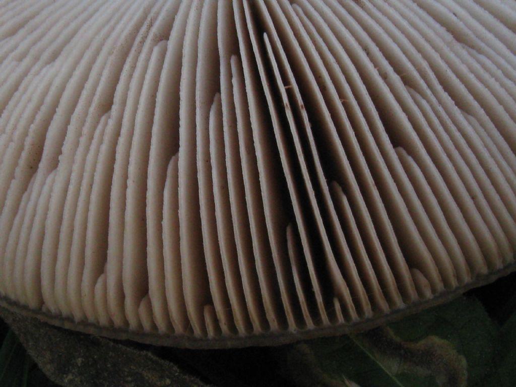 Funghi nel Parco di Monza 4