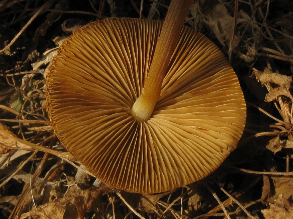 Quale fungo?