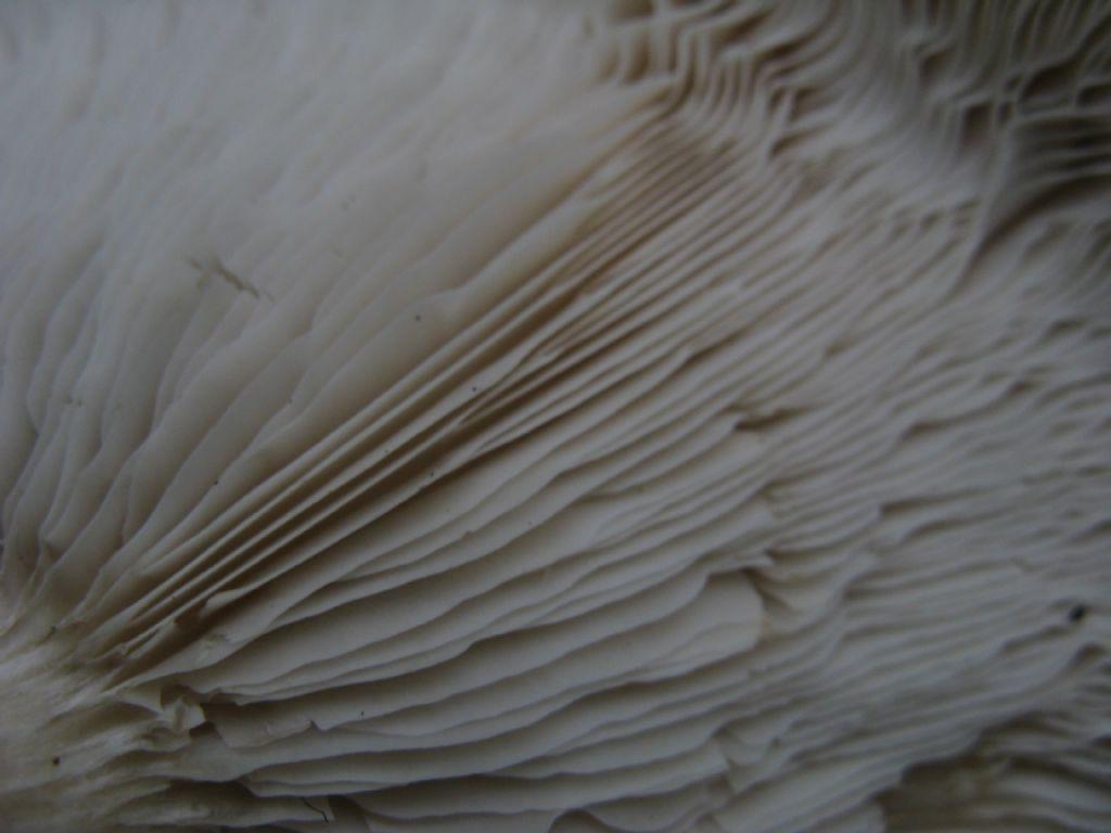Funghi da ident. 9