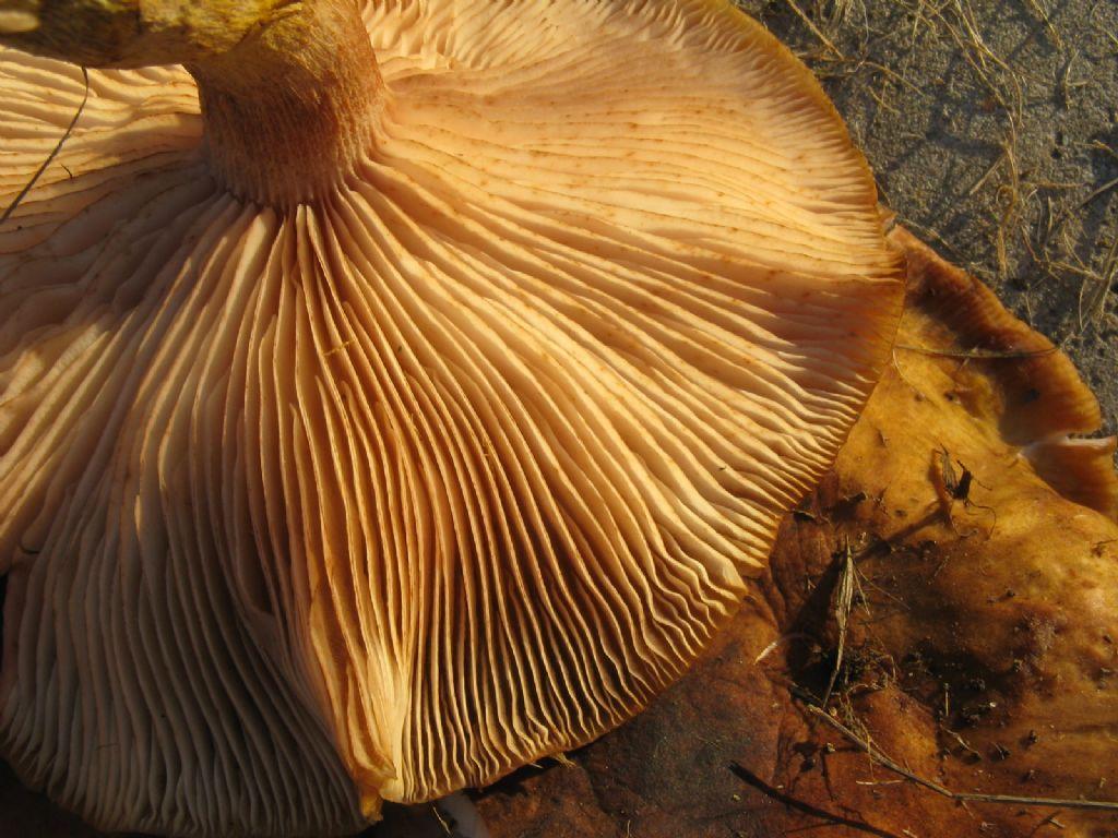 Funghi da ident. 10