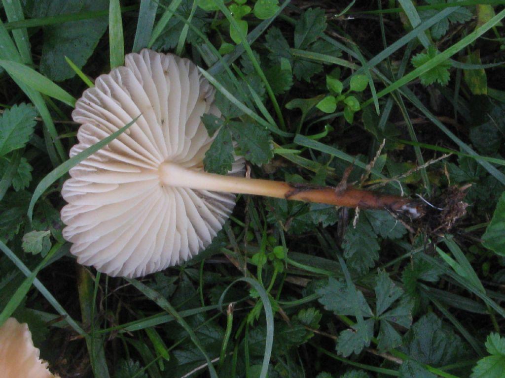Funghi da ident. 14