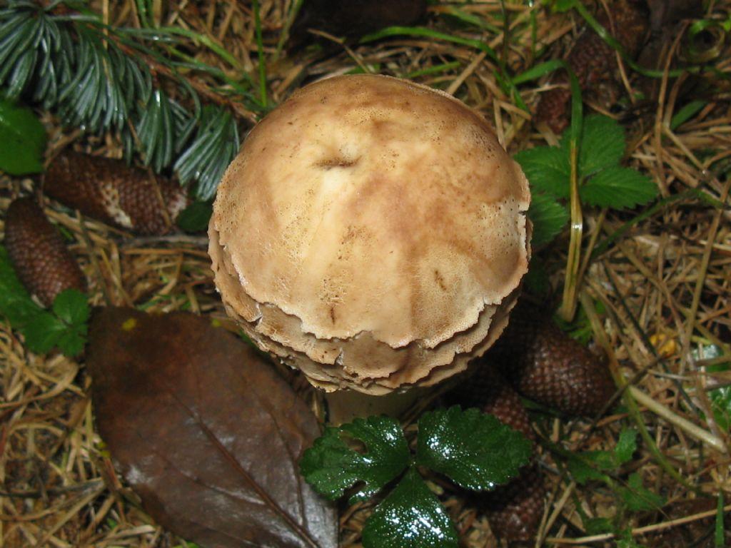 Funghi da ident. 16