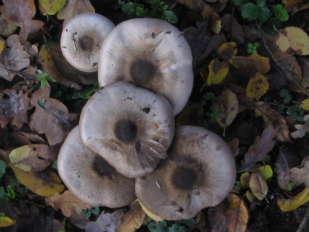 Funghi da ident. 18