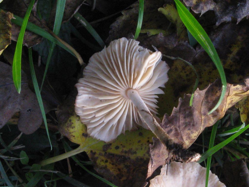 Funghi da ident. 22