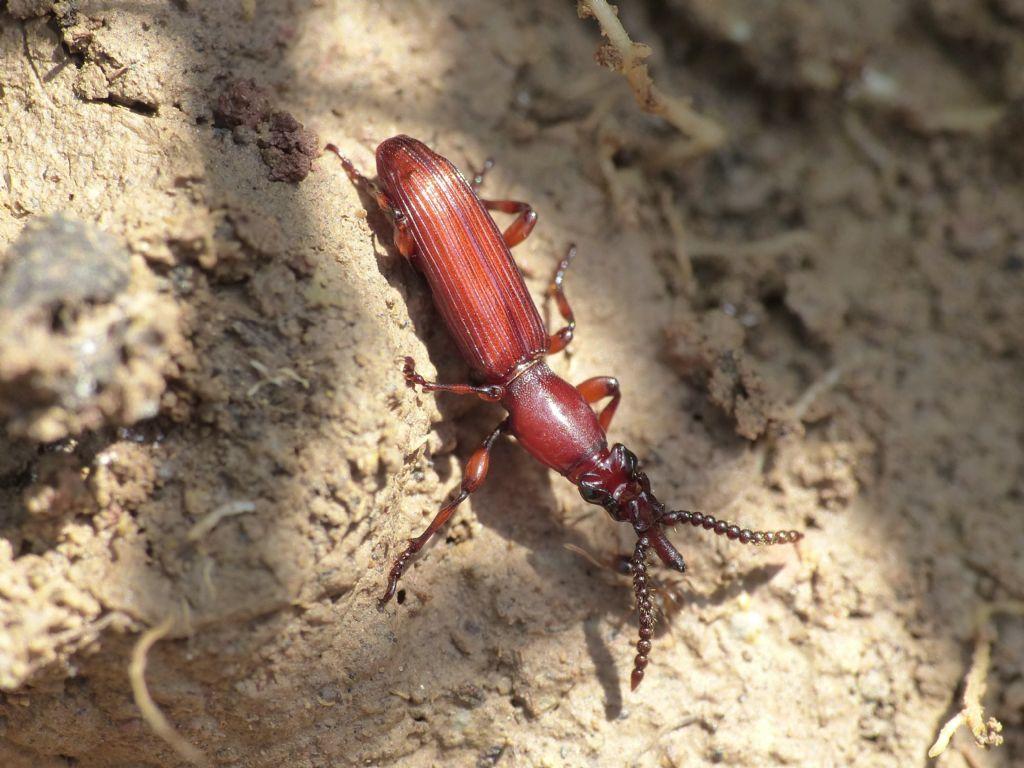 Ospiti delle formiche (galleria fotografica)