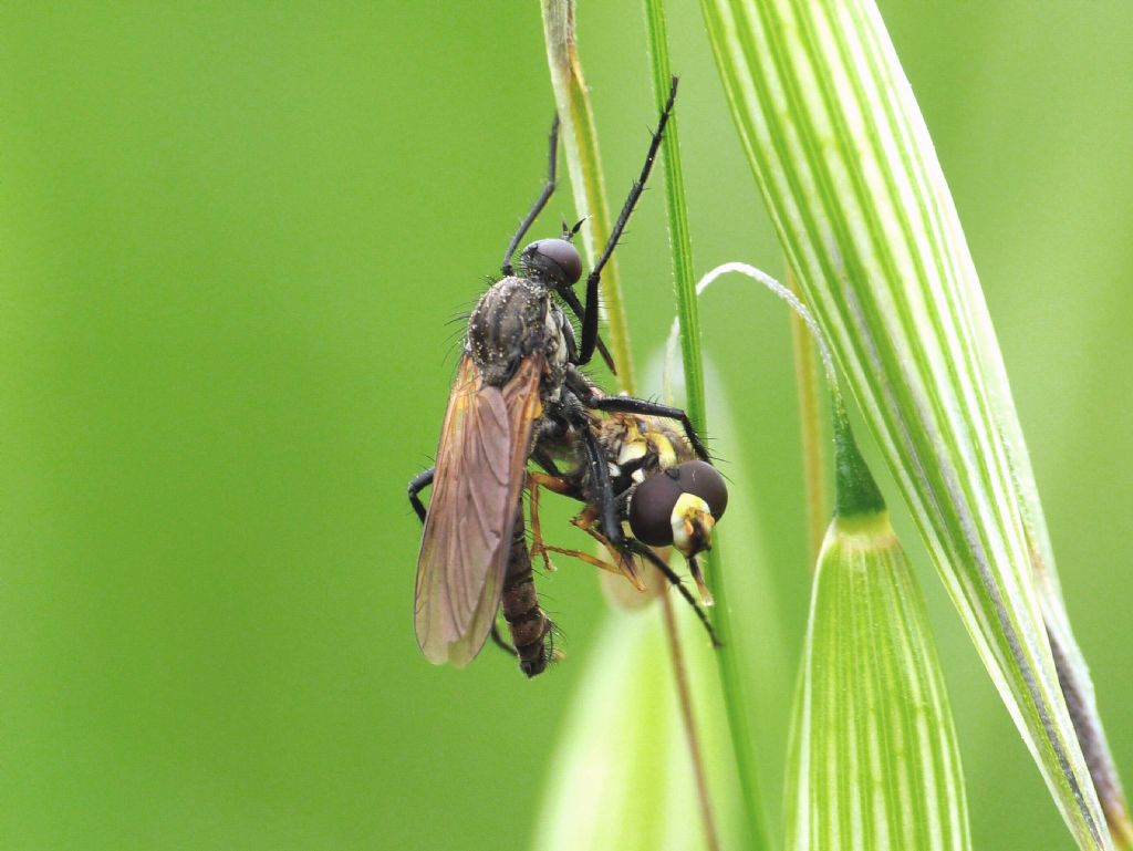 Il sesso nei ragni: Galleria fotografica