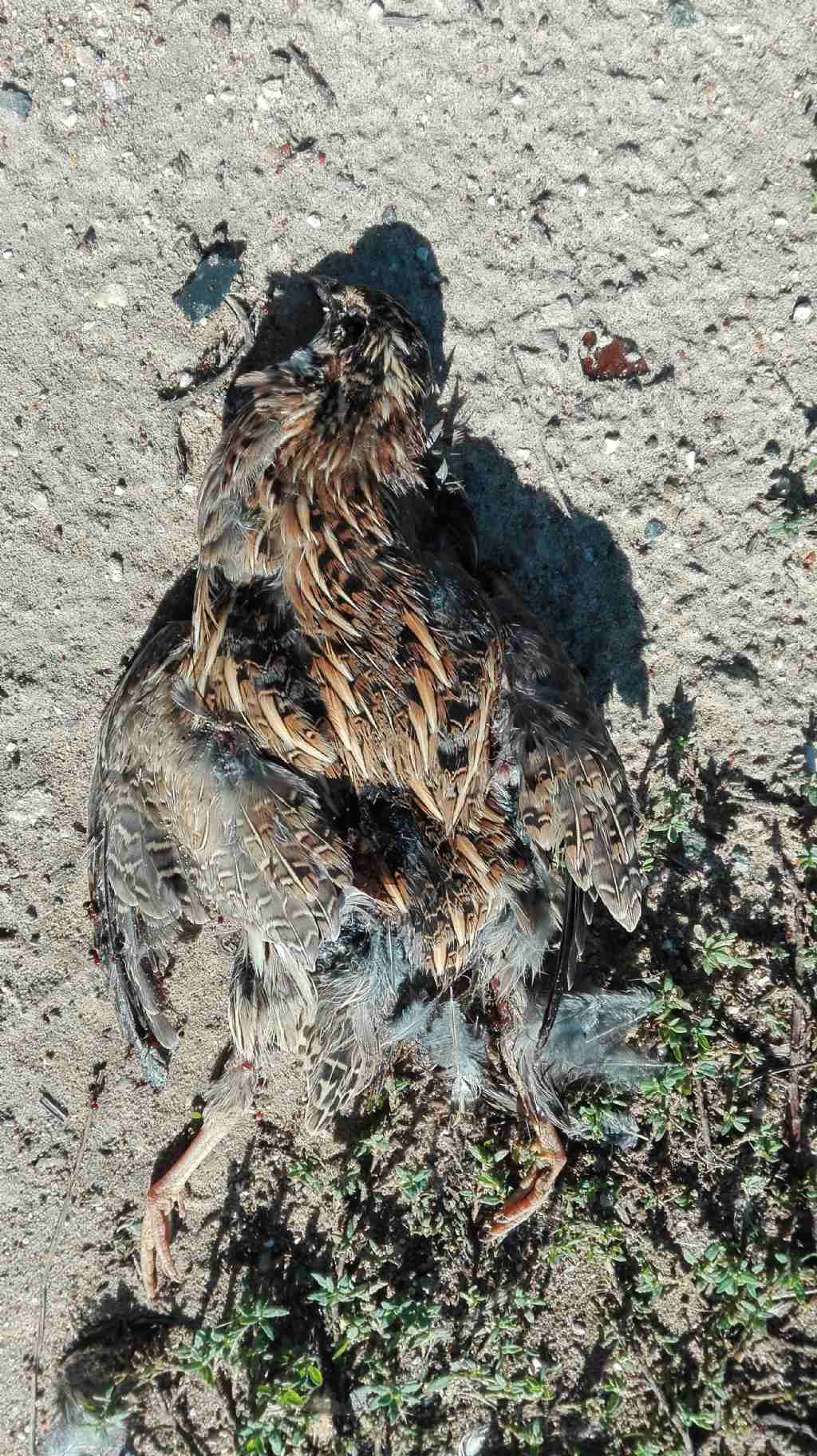 SEGNALAZIONI: Selvatici morti