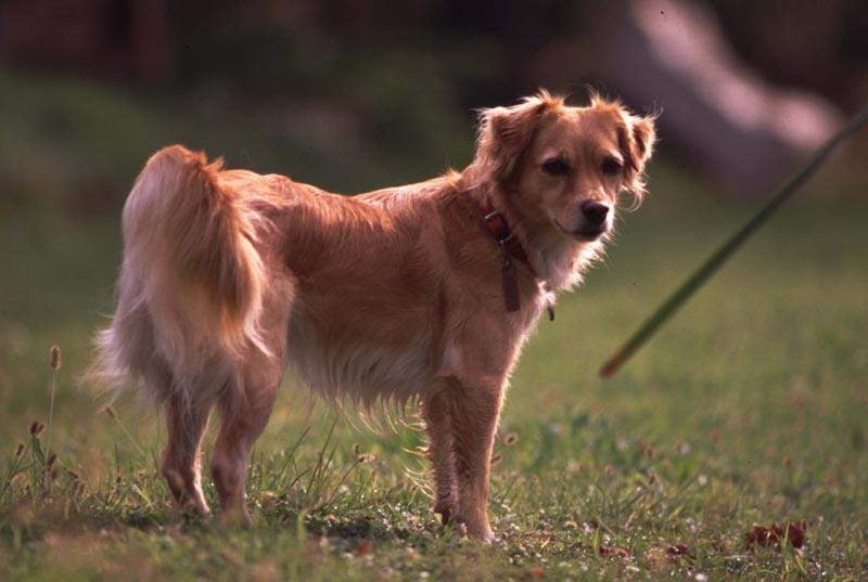 Cuccioli di cane in regalo o in vendita? Una riflessione