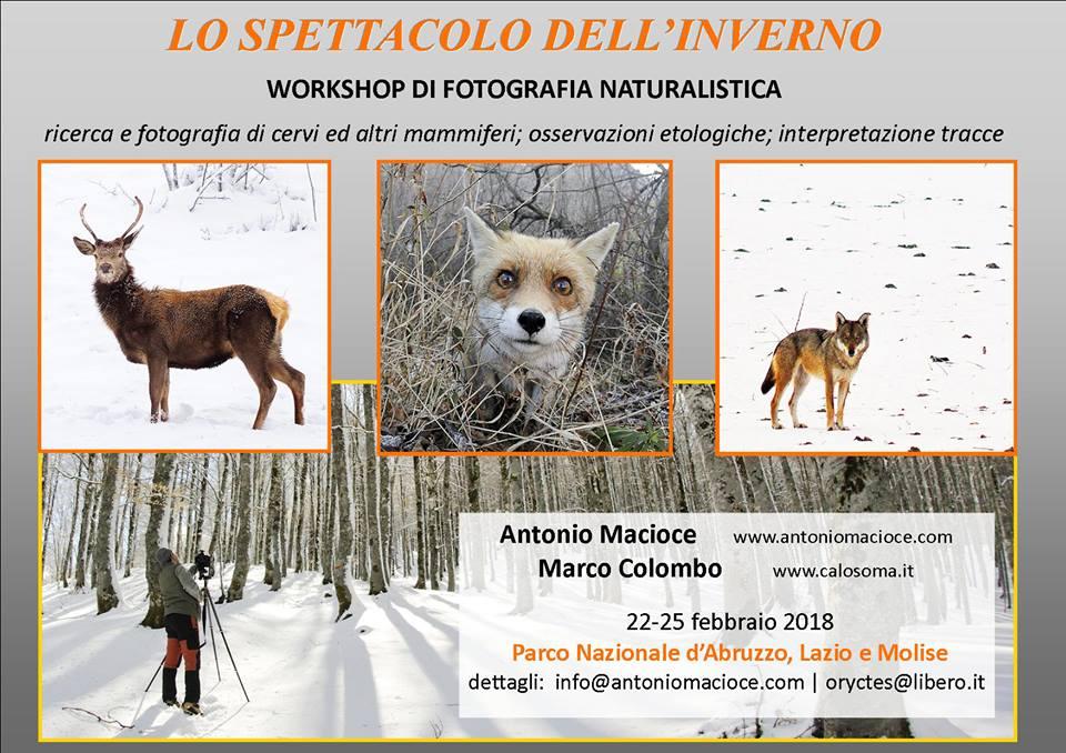 workshop di fotografia e osservazione mammiferi, Abruzzo
