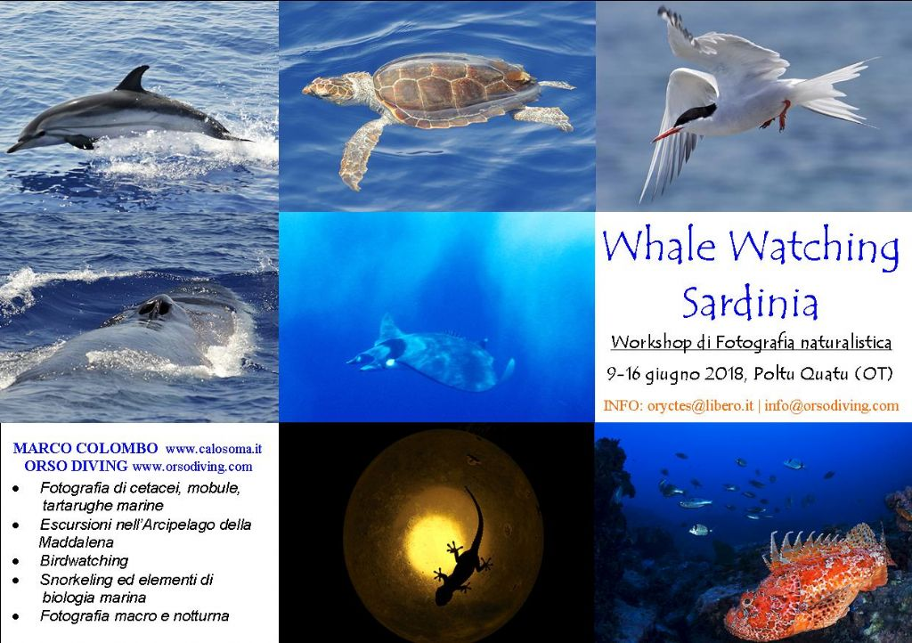 Whale watching, biologia marina, birdwatching, snorkeling, fotografia
