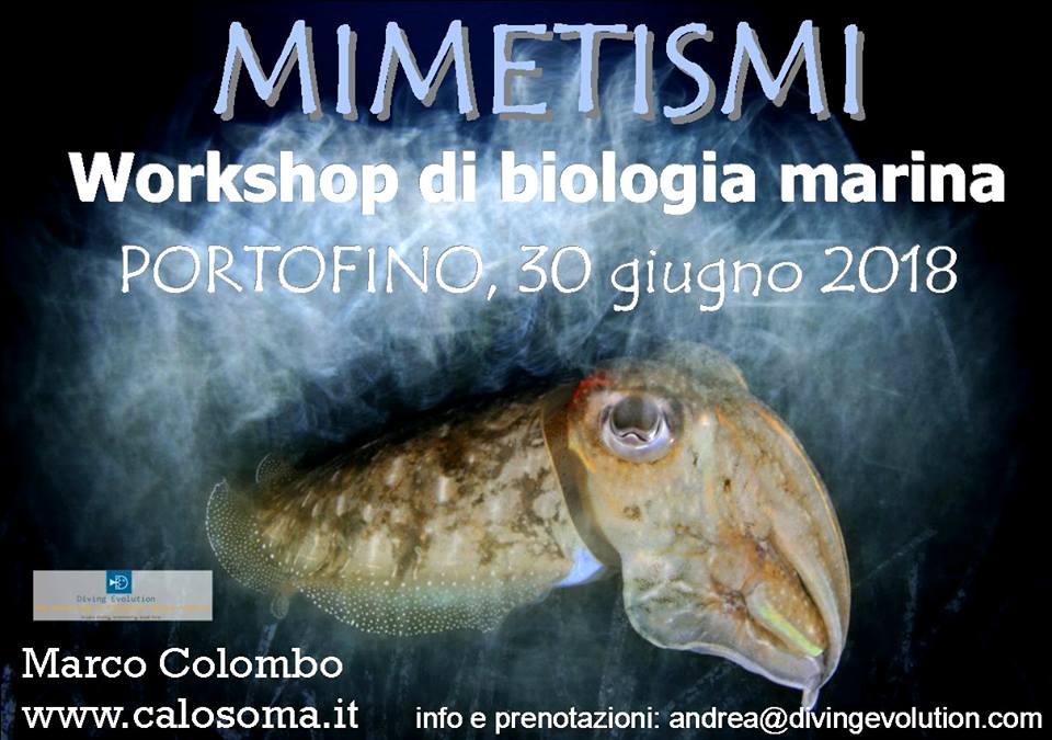 Workshop di biologia marina a Portofino sul mimetismo