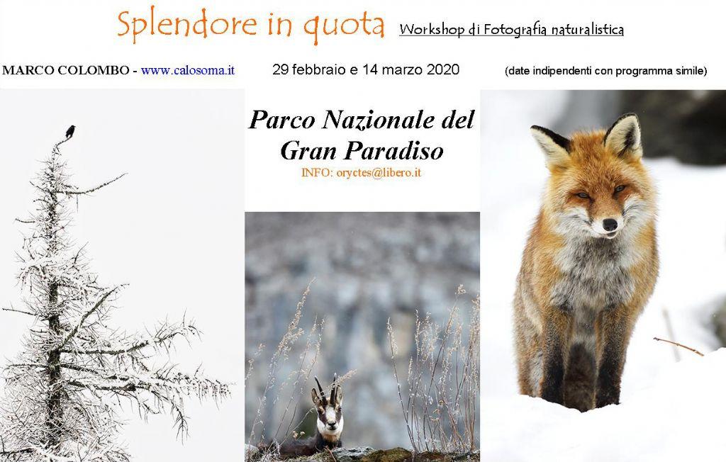 workshop di fotografia naturalistica Parco Nazionale del Gran Paradiso