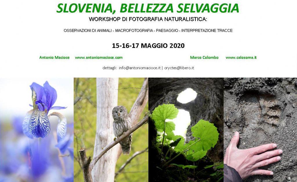 Slovenia, bellezza selvaggia