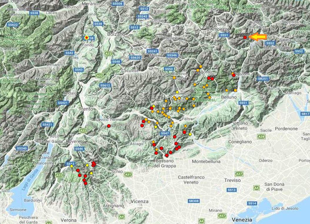 Kosicia ambrosi in Val d''Oten (BL)