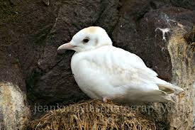 Albinismo / leucismo / isabellismo