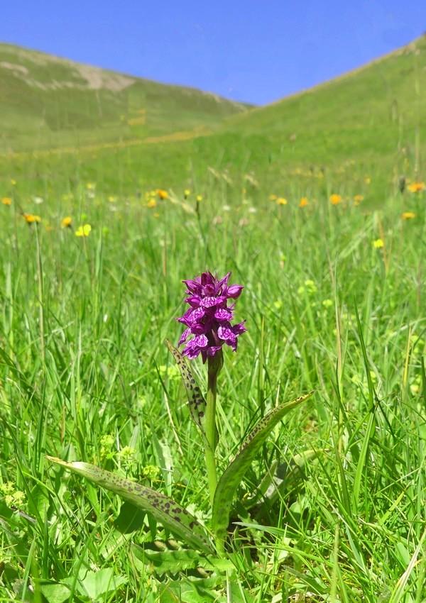MONDEVAL: le orchidee e la preistoria.
