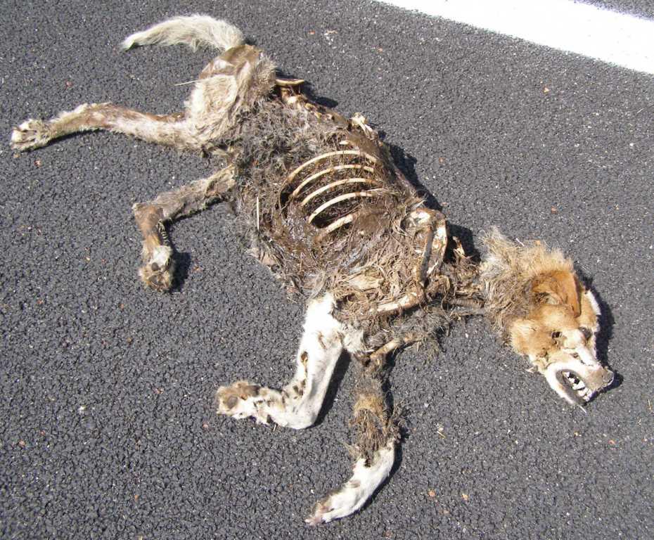 Cane sbranato chi pu essere l 39 artefice forum natura - Quando fare il primo bagno al cane ...