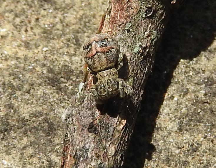 ID ragno su albero