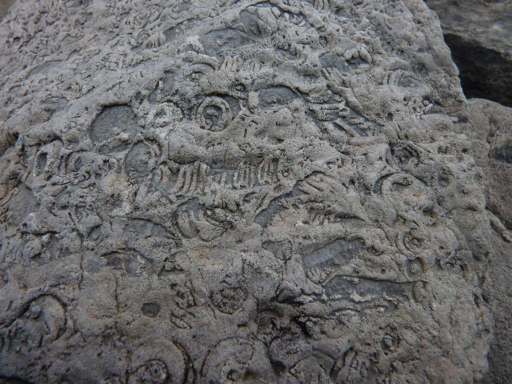 Fossili? o che altro
