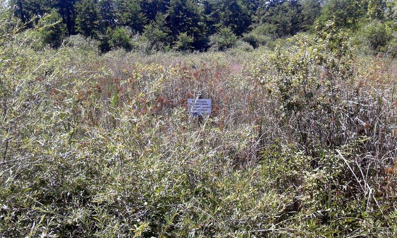 L''uomo e la natura: conservazione e gestione