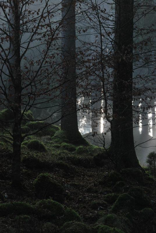 Cansiglio: alberi e paesaggio