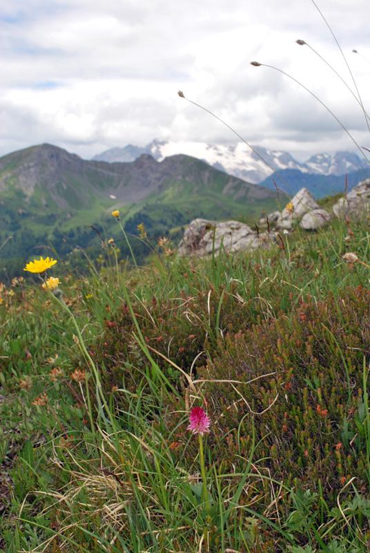 Conferme e sorprese delle alte quote delle  Dolomiti bellunesi