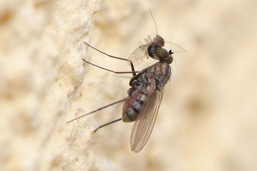 Galleria di insetti predatori e loro prede