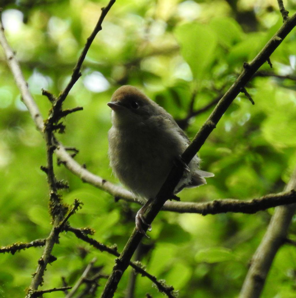 Identificazione uccellino