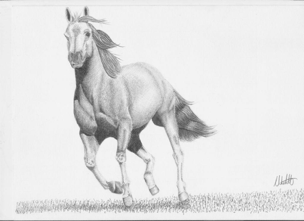 disegno a matita cavallo forum natura mediterraneo