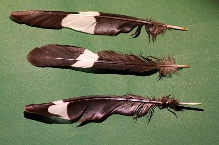 Riconoscimento penne