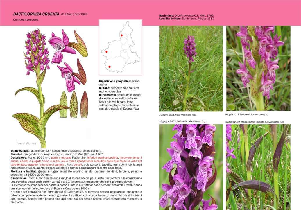 Guida /Atlante Orchidee Piemontesi , Forum Natura