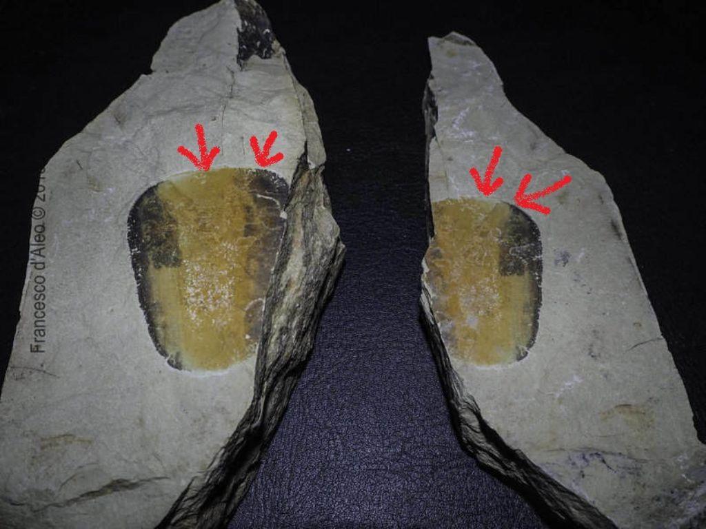 Fossile? Calabria 11-02  No, deposizione di una patina minerale