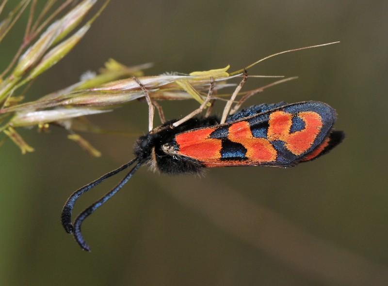 Qualche farfalla interessante dal sud della Francia