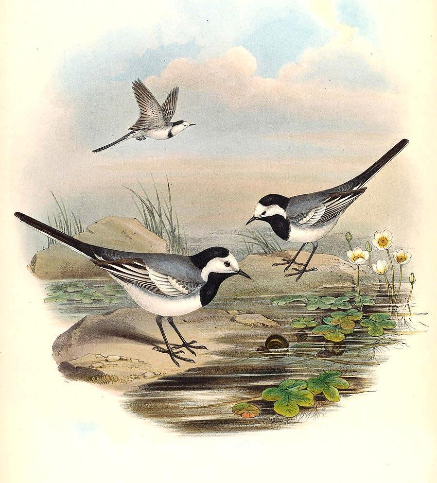 Piccolo uccellino da identificare