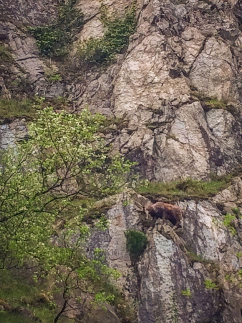I camosci del Monte Pirchiriano - ritrovamenti