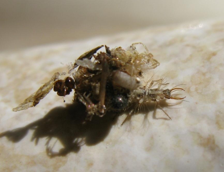 Larva di....?