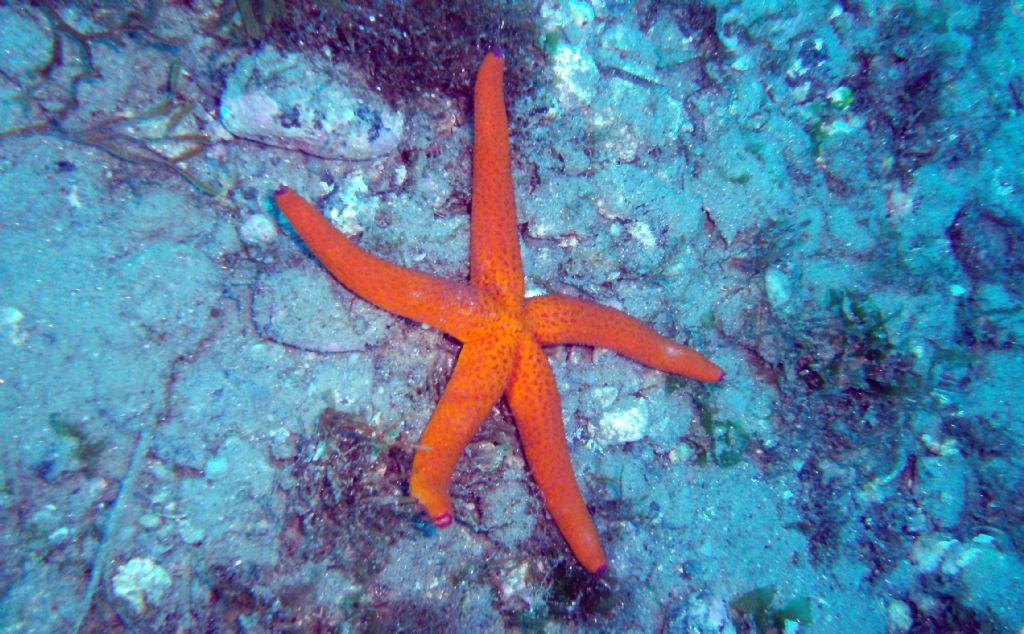 Immersioni nello stretto di Messina