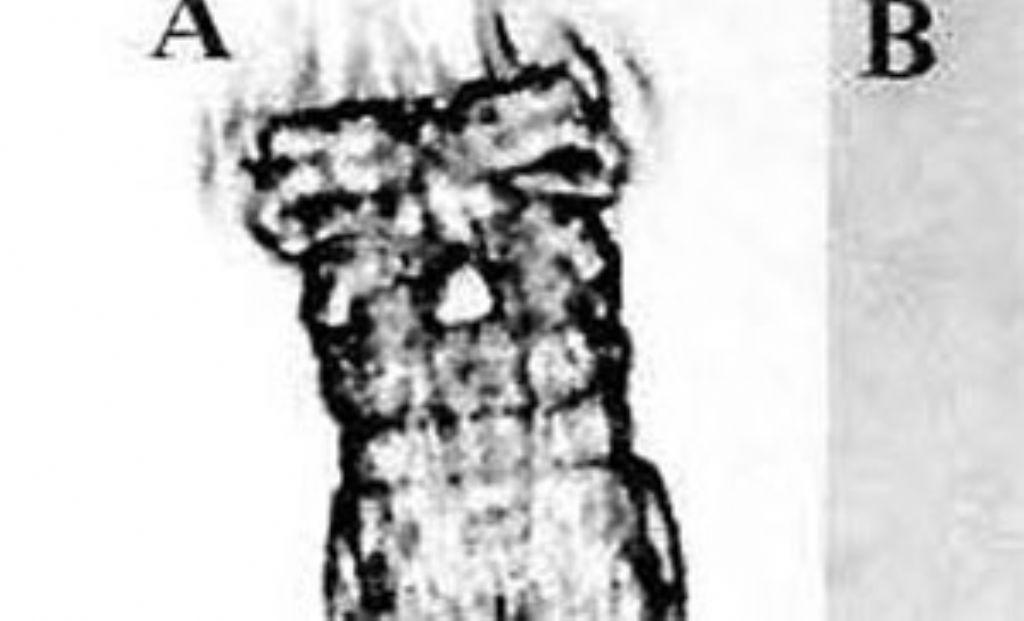 Otostephanos monteti: che sia lui?
