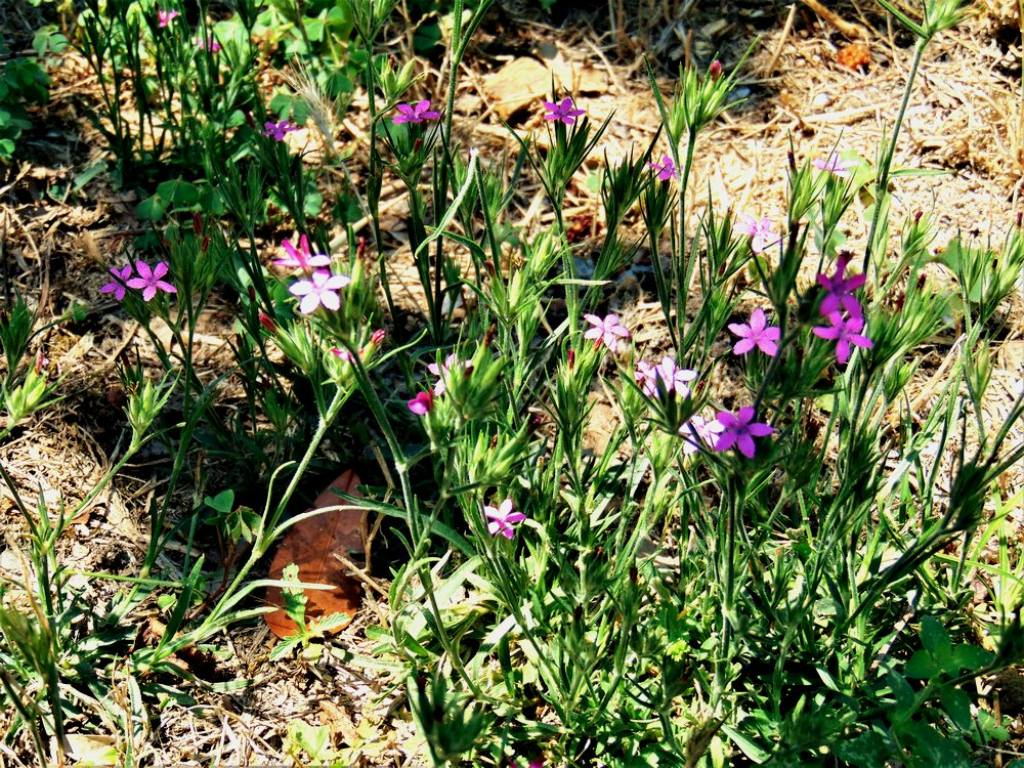 fiore selvatico da det