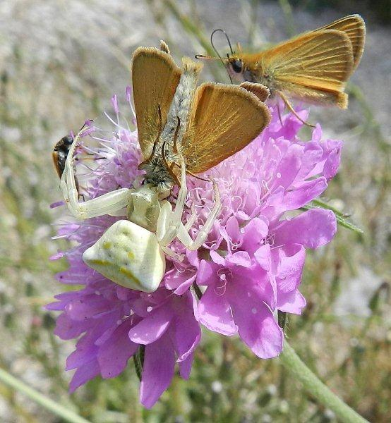 Predatori di farfalle