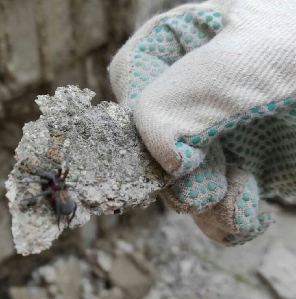 Amaurobius sp? Monte Faito (NA)