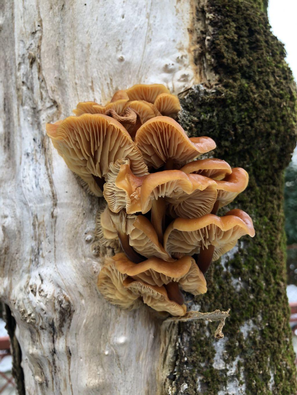 Funghi da Id