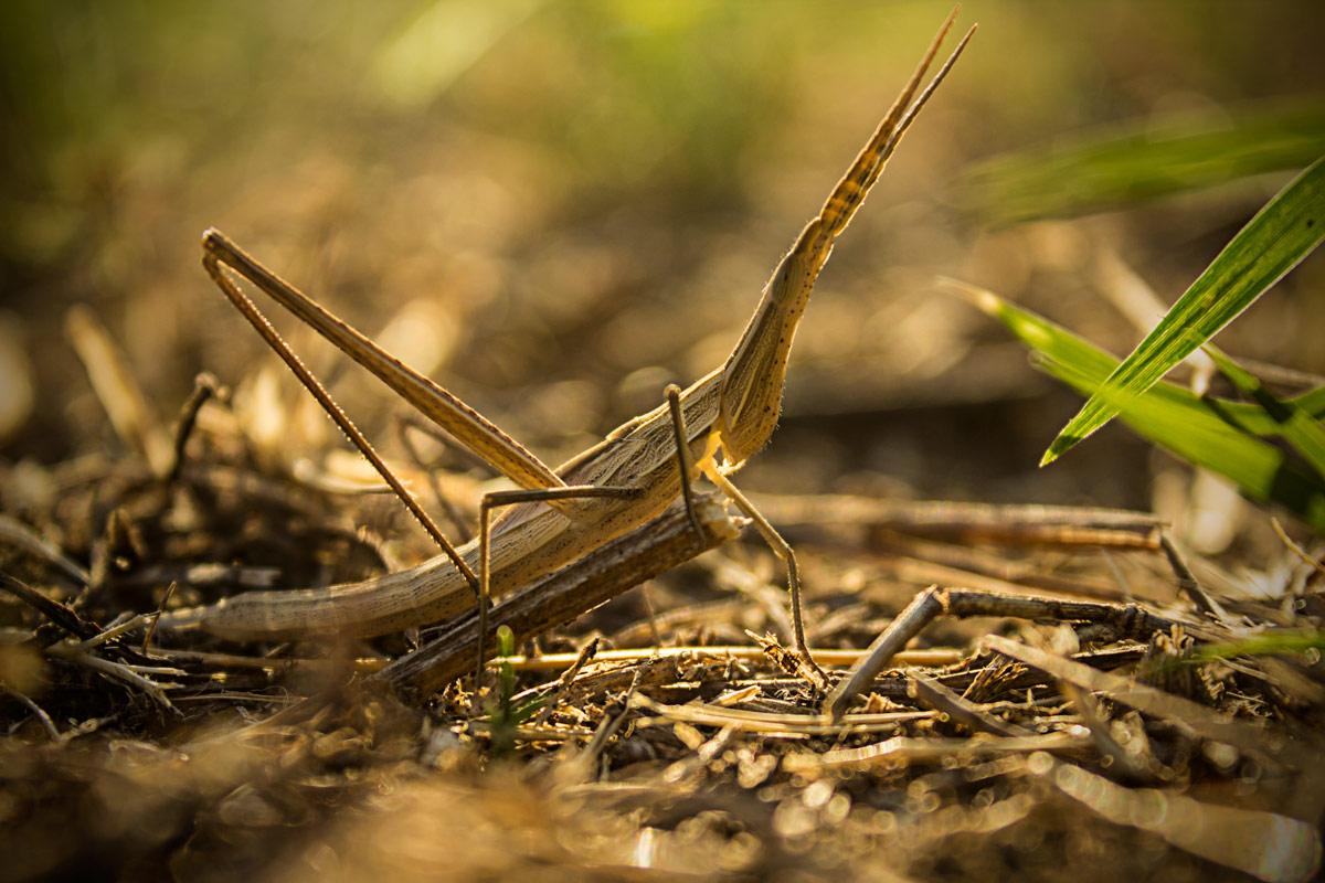 Insetto con aspetto mimetico tipo ramo di erba sezza for Che tipo di prestito puoi comprare terra